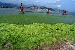 Algae blooms are typically caused by pollution in China