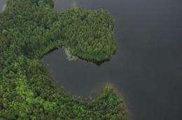 Aquatic food web tied to land