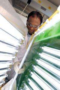 Benchtop biofuels: Fine-tuning growth conditions helps cyanobacteria flourish