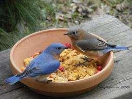 Big, social, Island-dwelling birds live longest