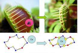 New material traps radioactive ions using 'Venus flytrap' method