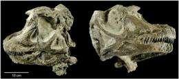 New species of dinosaur found in eastern Utah rock (AP)