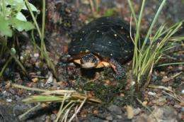 Turtle populations affected by climate, habitat loss and overexploitation