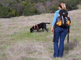 Wildlife biologists use dogs' scat-sniffing talents for good