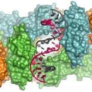 Illuminating the mechanism used by HIV to attack human DNA with x-rays