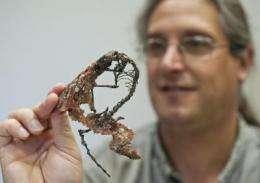 University of Florida research provides new understanding of bizarre extinct mammal