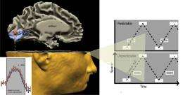 The scientific brain: Human brain processes predictable sensory input in particularly efficient manner