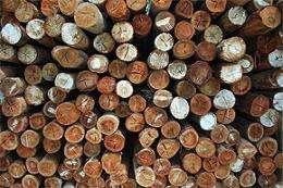 Deforestation failure sounds climate alarm