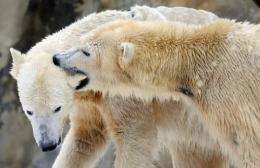Environmental groups accuse Obama of failing to ensure the survival of polar bears