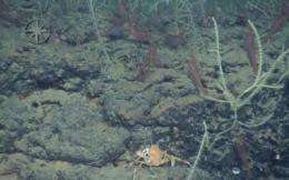 Magnificent coral reefs discovered