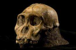 New hominid shares traits with Homo species