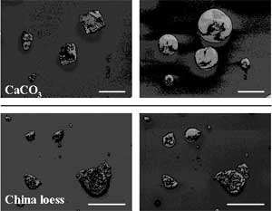 Secondary electron (SE) images of CaCO3 and China loess particles before and after reaction with gaseous HNO3 in the presence of