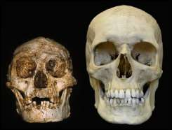 A skull (L) found a year ago in Liang Bua cave on the Indonesian island of Flores and a human skull