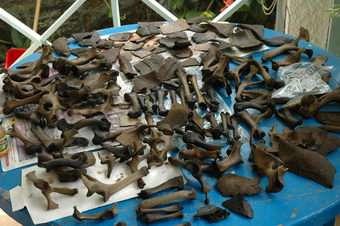 Sensational new discovery of Dodo bones on Mauritius