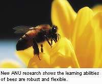 Bees show sophisticated learning abilities