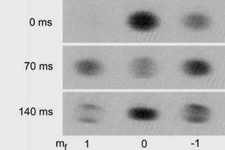 Images of atomic clouds show the change in population distribution over time for rubidium atoms in three different spin states.
