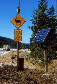 Wildlife-Detection System in Yellowstone