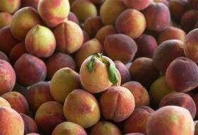 Professor invents 'ripeness' sticker (AP)