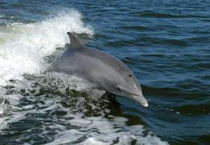 Marine technology inspired by dolphins' speed