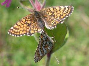 Have Traits, Will Travel: Some Butterflies Travel Farther, Reproduce Faster