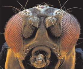 Next-generation cameras inspired by fruit flies and moths