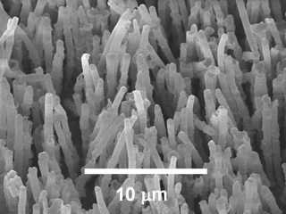 Engineers create gecko-inspired, high-friction micro-fibers