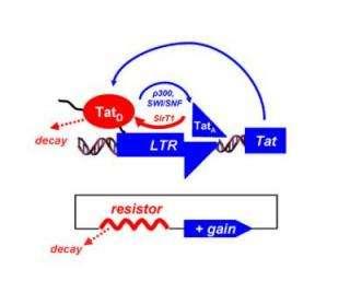 HIV Tat Feedback Resistor