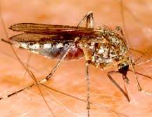 Mosquitoes and West Nile virus are still a threat in Montana