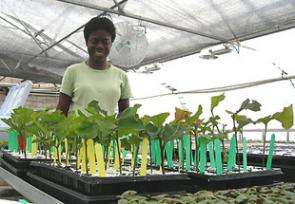 Nurseries to Give Big-City Test to Cloned Trees