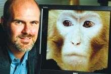'Executive' Monkeys Influenced By Other Executives, Not Subordinates