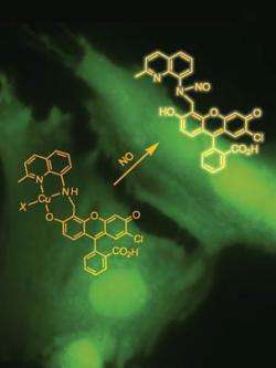 Sensor opens up study of crucial molecule