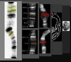 New technique will produce a better chromosome map