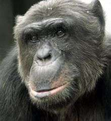 Activists Want Chimp Declared a 'Person' (AP)