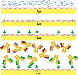 Biocapture Surfaces Produced for Study of Brain Chemistry