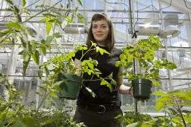 In evolutionary arms race, a bacterium is found that outwits tomato plant's defenses