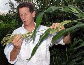 Iowa State researcher studies the sustainability of the bioeconomy