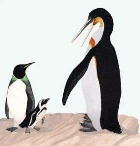 Prehistoric equatorial penguins reached 5 feet in height