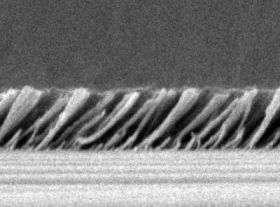 Silica Nanorods
