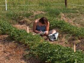 Strawberry fields ripe for the picking