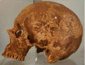 Trophy Skull Sheds Light on Ancient Wari Empire
