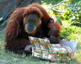 World's Oldest Orangutan Dies at Age 55 (AP)