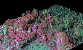 3-D Imaging of Invasive Tree Species