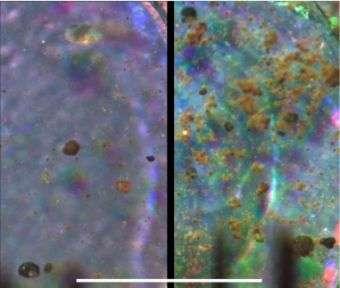 Phoenix Mars Lander Inspects Delivered Soil Samples