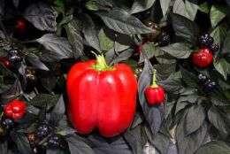Breeding Parasite-Resistant Plants