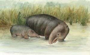 Early elephant 'was amphibious'