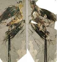 New fossil bird found
