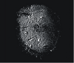 First images of barnacle larva's footprint