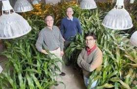 Gene guards grain-producing grasses so people and animals can eat