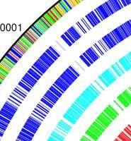 Superbug genome sequenced
