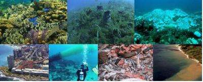 Humans have caused profound changes in Caribbean coral reefs